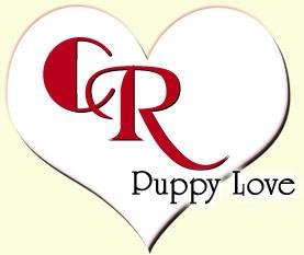 cr puppy love your breeder network finder working to place the